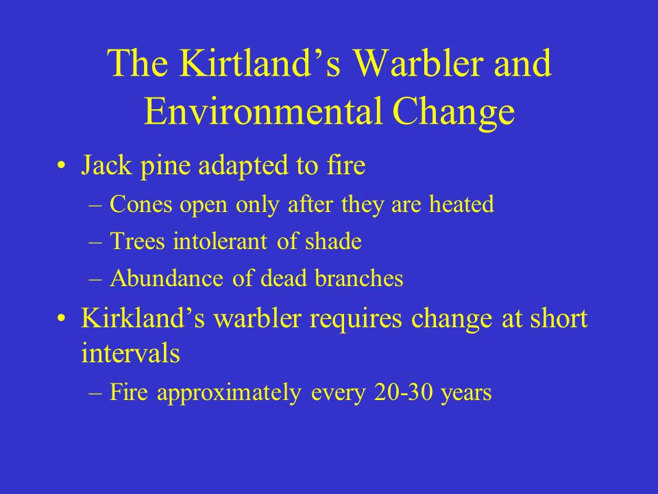 The Kirtland's Warbler and Environmental Change Jack pine adapted to fire –Cones open only after they are heated –Trees intolerant of shade –Abundance