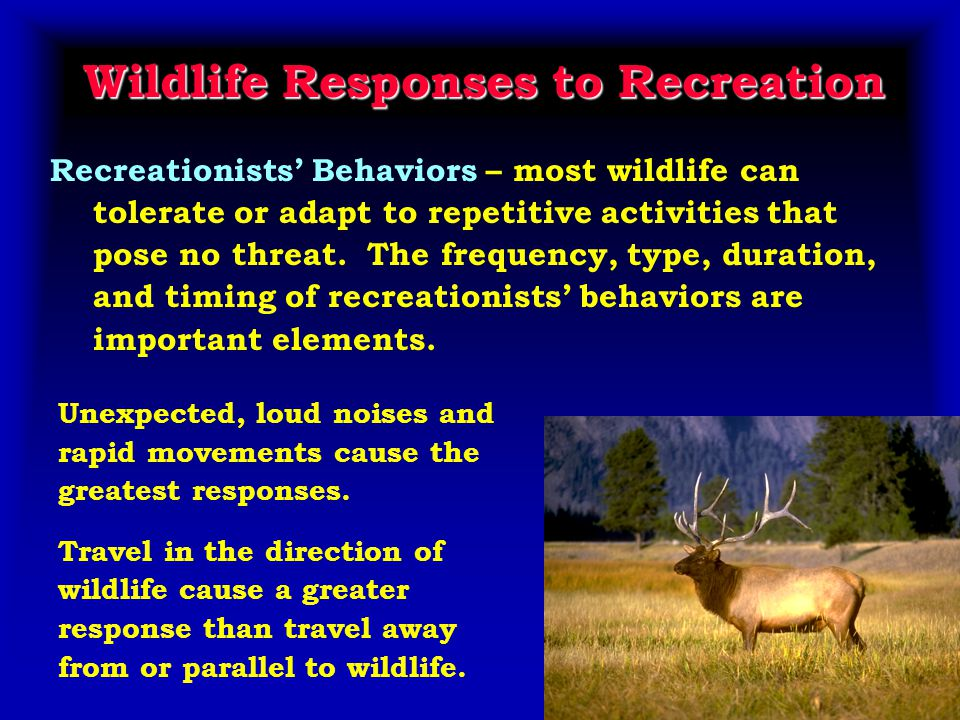 Wildlife Responses to Recreation Recreationists' Behaviors – most wildlife can tolerate or adapt to repetitive activities that pose no threat.