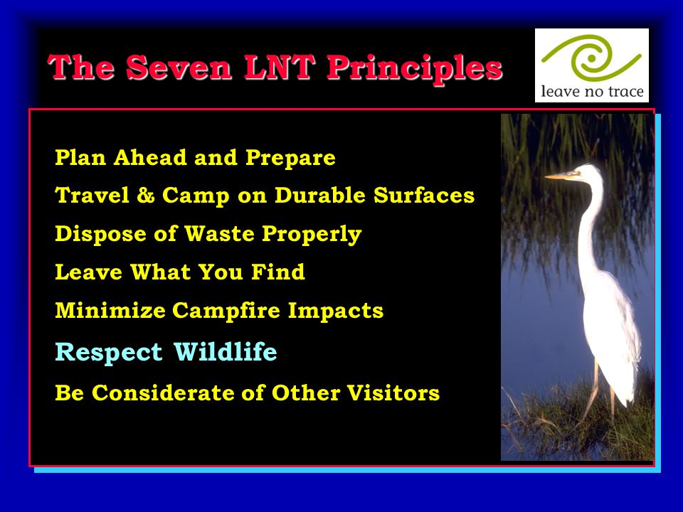 The Seven LNT Principles Plan Ahead and Prepare Travel & Camp on Durable Surfaces Dispose of Waste Properly Leave What You Find Minimize Campfire Impacts Respect Wildlife Be Considerate of Other Visitors