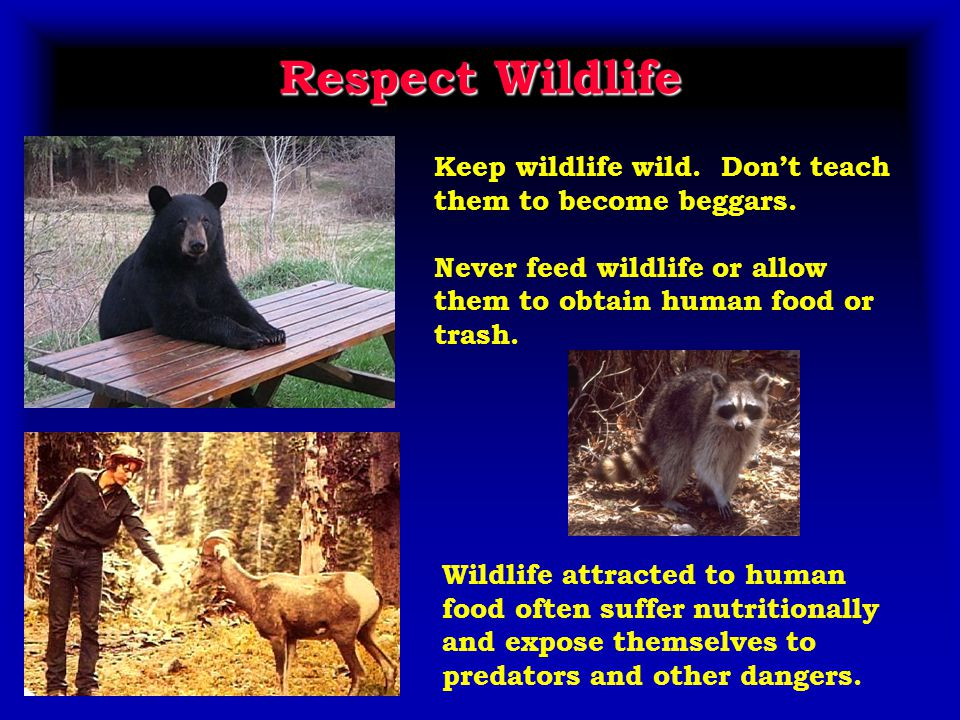 Respect Wildlife Keep wildlife wild. Don't teach them to become beggars.