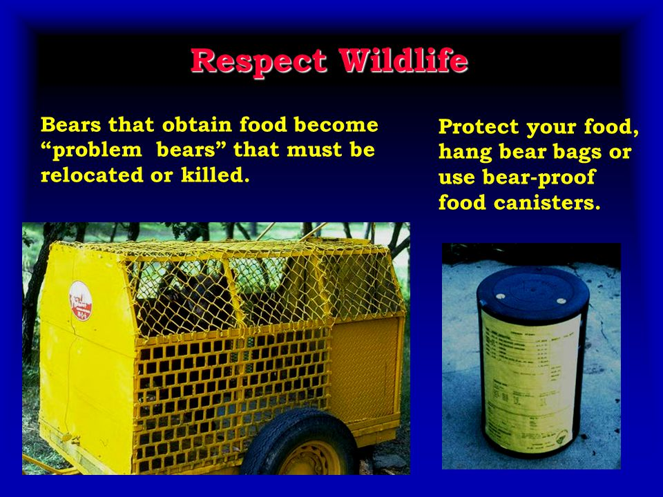 Respect Wildlife Bears that obtain food become problem bears that must be relocated or killed.