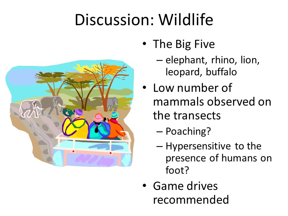 Discussion: Wildlife The Big Five – elephant, rhino, lion, leopard, buffalo Low number of mammals observed on the transects – Poaching.