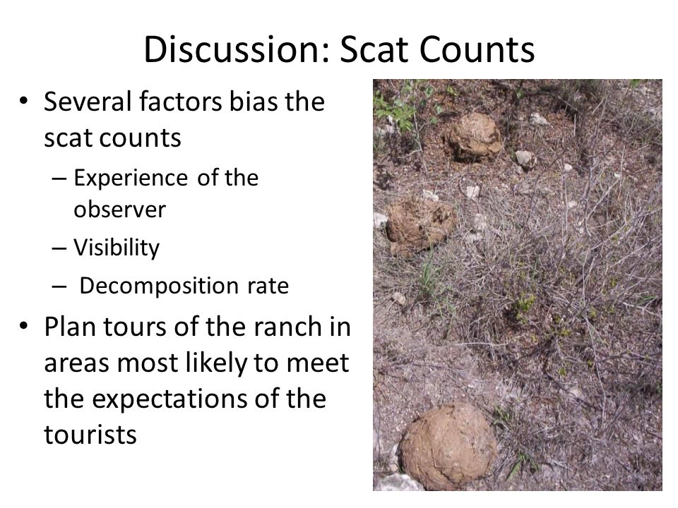 Discussion: Scat Counts Several factors bias the scat counts – Experience of the observer – Visibility – Decomposition rate Plan tours of the ranch in areas most likely to meet the expectations of the tourists