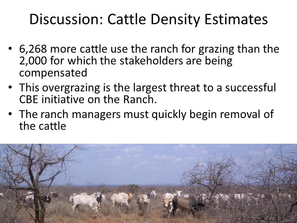 Discussion: Cattle Density Estimates 6,268 more cattle use the ranch for grazing than the 2,000 for which the stakeholders are being compensated This overgrazing is the largest threat to a successful CBE initiative on the Ranch.