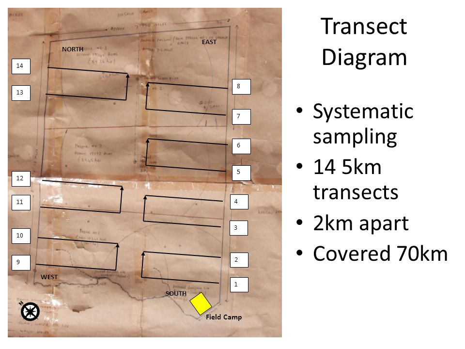 Transect Diagram NORTH EAST 14 13 12 11 WEST SOUTH 10 9 6 5 7 8 2 1 4 3 Field Camp Systematic sampling 14 5km transects 2km apart Covered 70km