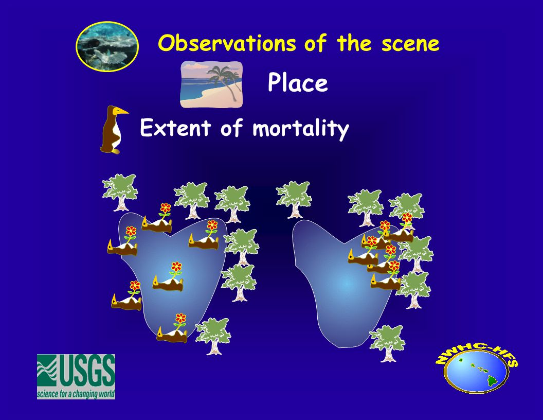 Place Observations of the scene Extent of mortality