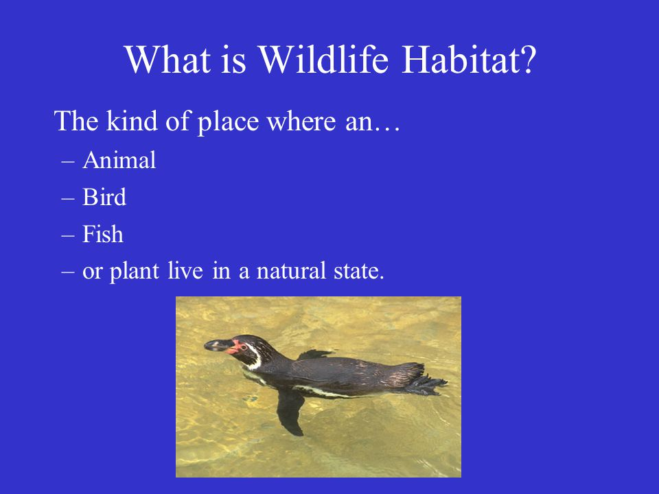 What is Wildlife Habitat.