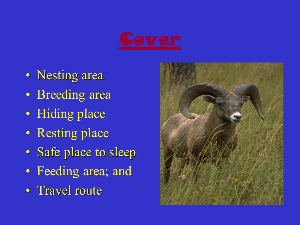 Cover Nesting areaNesting area Breeding area Hiding place Resting place Safe place to sleepSafe place to sleep Feeding area; and Travel routeTravel route