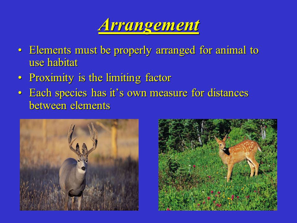 Space Space or Territory requirements vary greatly among animals Mountain lion=up to 150 square miles House Wren=few as 150 square feet Effected by migration, immigration (in), emigration (out)