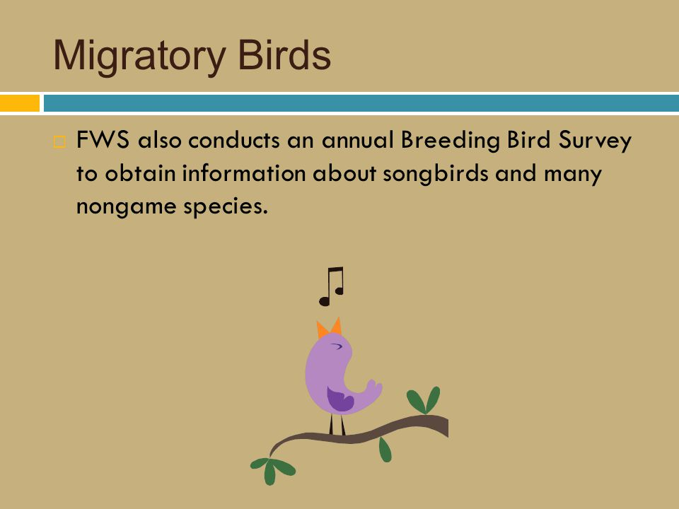Migratory Birds  FWS also conducts an annual Breeding Bird Survey to obtain information about songbirds and many nongame species.