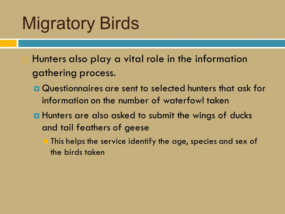 Migratory Birds  Hunters also play a vital role in the information gathering process.