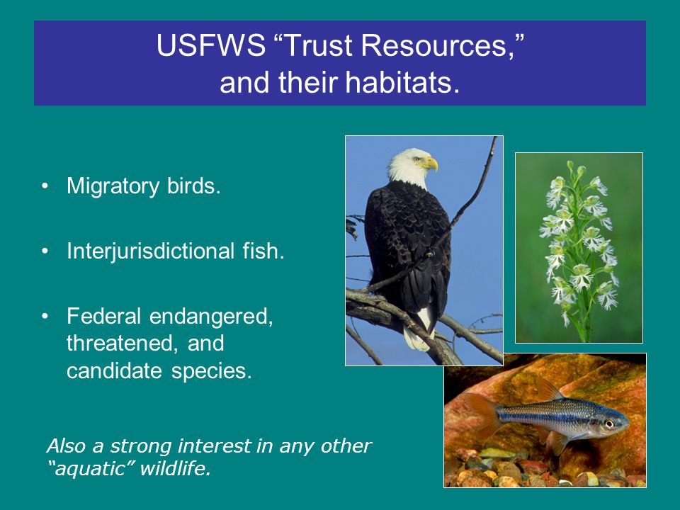 USFWS Trust Resources, and their habitats. Migratory birds.
