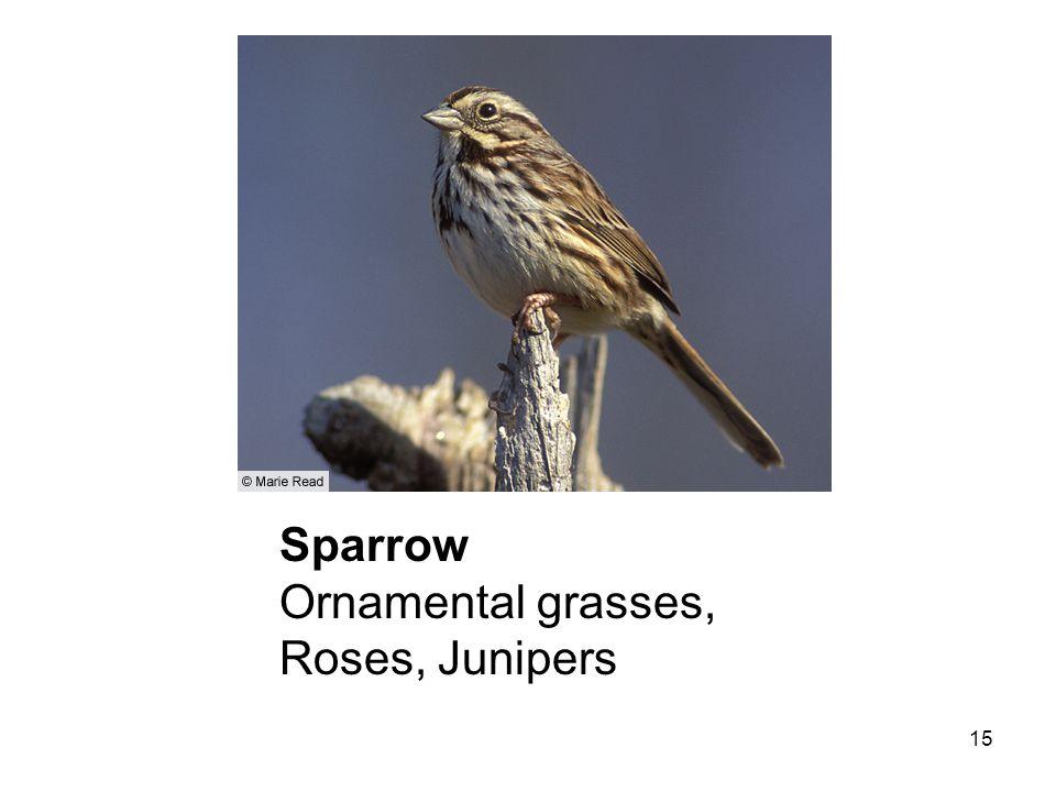 15 Sparrow Ornamental grasses, Roses, Junipers