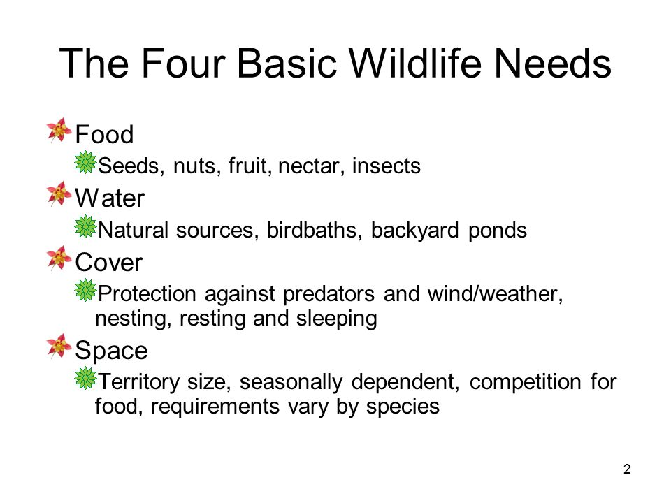 2 The Four Basic Wildlife Needs Food Seeds, nuts, fruit, nectar, insects Water Natural sources, birdbaths, backyard ponds Cover Protection against pre