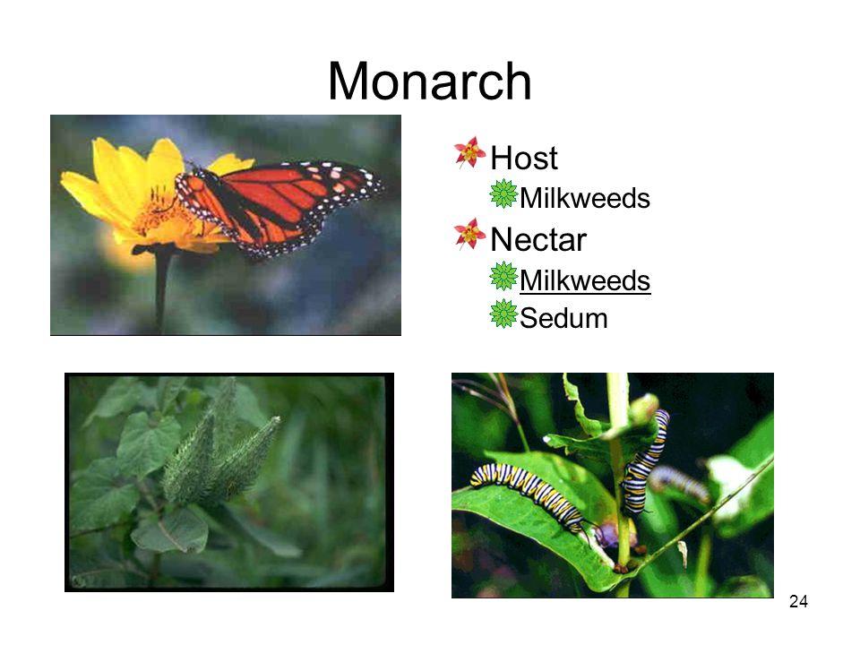 24 Monarch Host Milkweeds Nectar Milkweeds Sedum