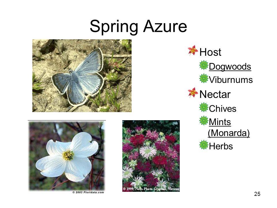 25 Spring Azure Host Dogwoods Viburnums Nectar Chives Mints (Monarda) Herbs