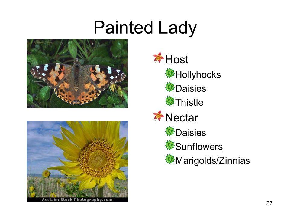27 Painted Lady Host Hollyhocks Daisies Thistle Nectar Daisies Sunflowers Marigolds/Zinnias