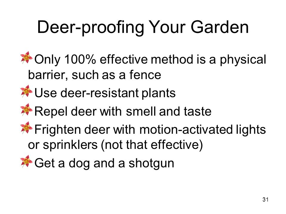 31 Deer-proofing Your Garden Only 100% effective method is a physical barrier, such as a fence Use deer-resistant plants Repel deer with smell and tas