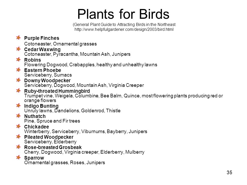 35 Plants for Birds (General Plant Guide to Attracting Birds in the Northeast http://www.helpfulgardener.com/design/2003/bird.html Purple Finches Coto