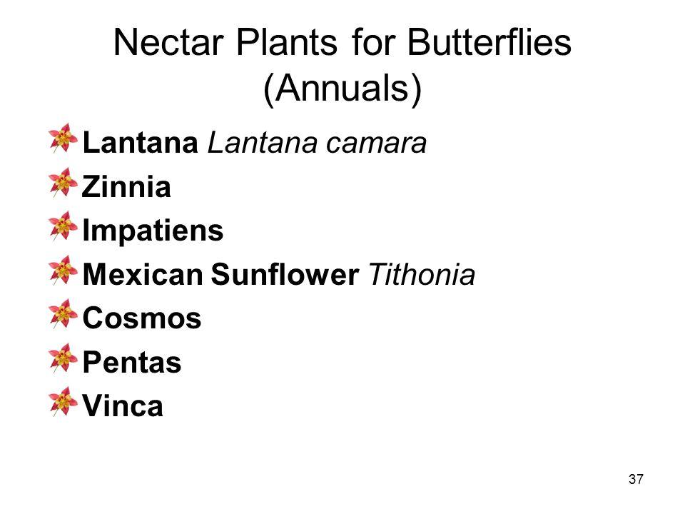 37 Nectar Plants for Butterflies (Annuals) Lantana Lantana camara Zinnia Impatiens Mexican Sunflower Tithonia Cosmos Pentas Vinca