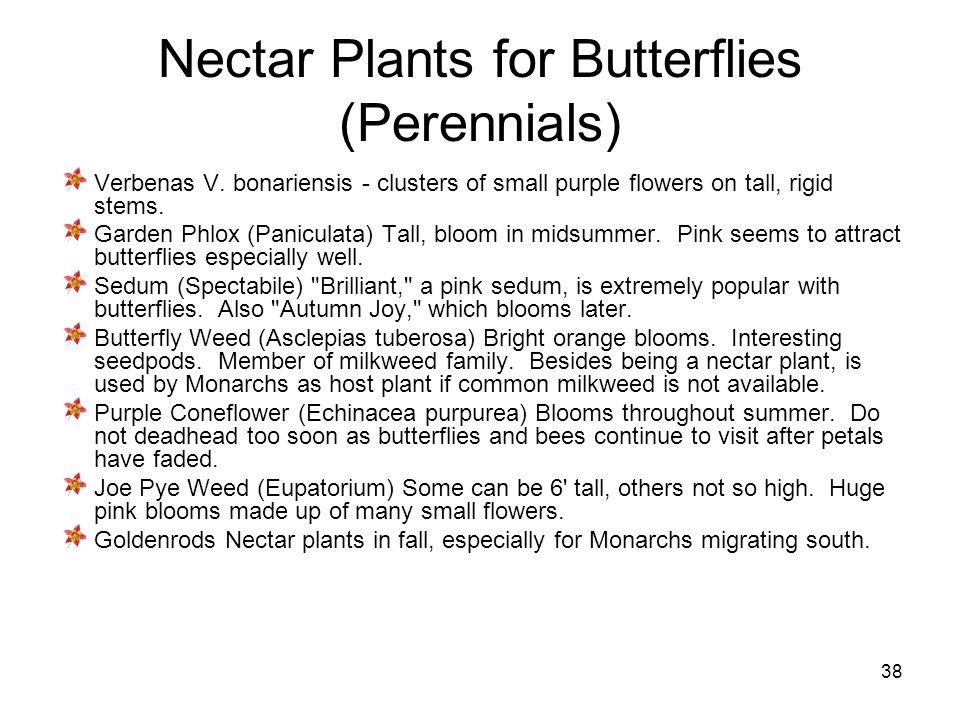 38 Nectar Plants for Butterflies (Perennials) Verbenas V.