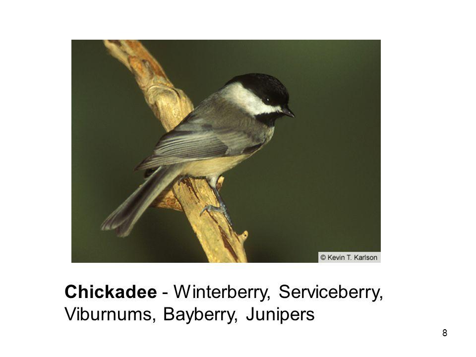 8 Chickadee - Winterberry, Serviceberry, Viburnums, Bayberry, Junipers