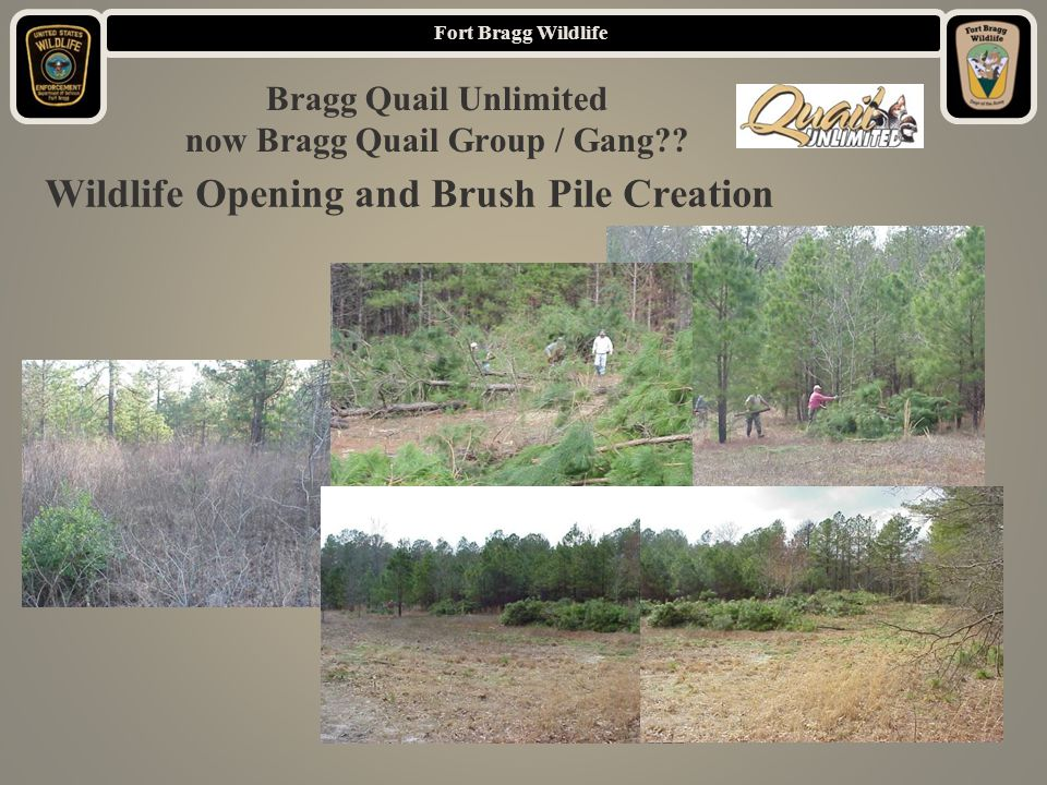 Fort Bragg Wildlife Wildlife Opening and Brush Pile Creation Bragg Quail Unlimited now Bragg Quail Group / Gang
