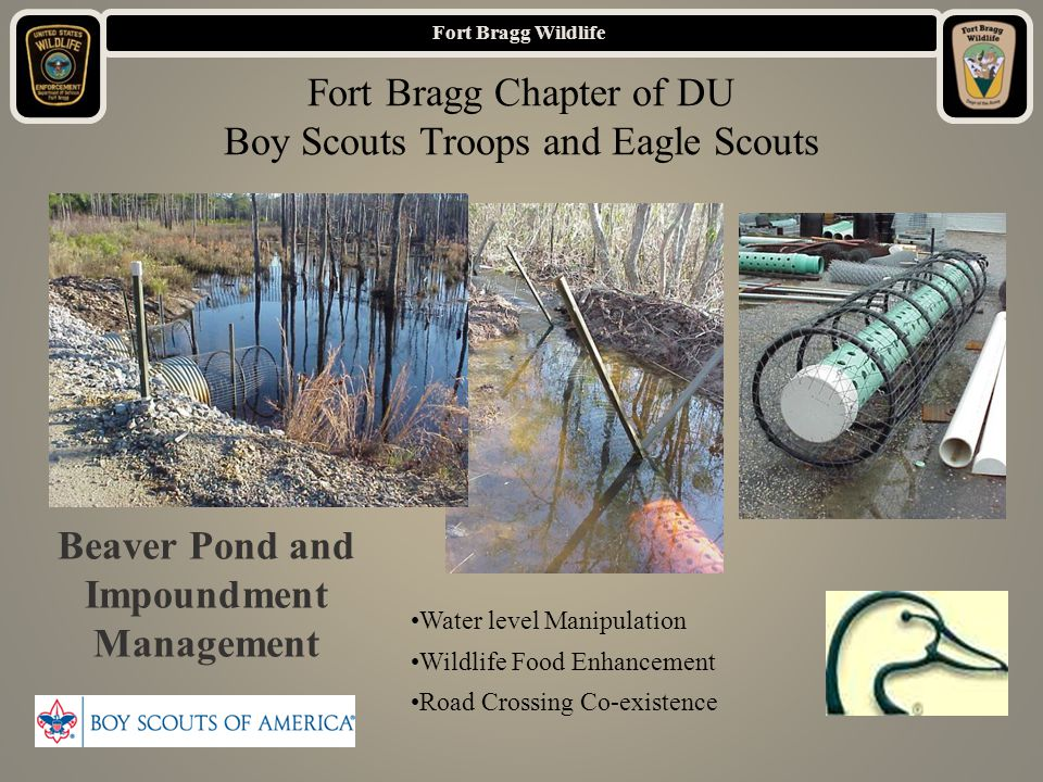 Fort Bragg Wildlife Beaver Pond and Impoundment Management Water level Manipulation Wildlife Food Enhancement Road Crossing Co-existence Fort Bragg Chapter of DU Boy Scouts Troops and Eagle Scouts