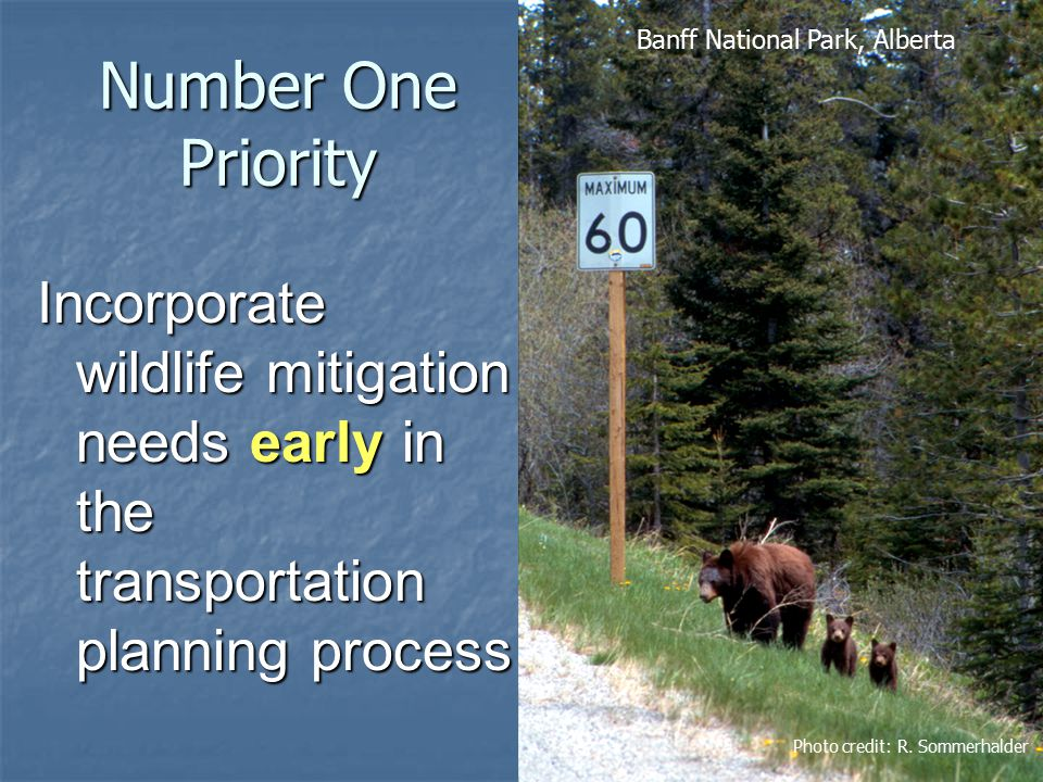 Number One Priority Incorporate wildlife mitigation needs early in the transportation planning process Photo credit: R.