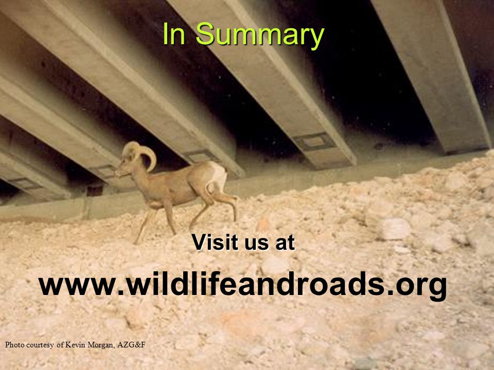 Photo courtesy of Kevin Morgan, AZG&F In Summary Visit us at www.wildlifeandroads.org