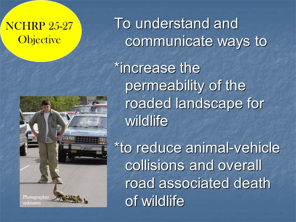 To understand and communicate ways to *increase the permeability of the roaded landscape for wildlife *to reduce animal-vehicle collisions and overall road associated death of wildlife NCHRP 25-27 Objective Photographer unknown