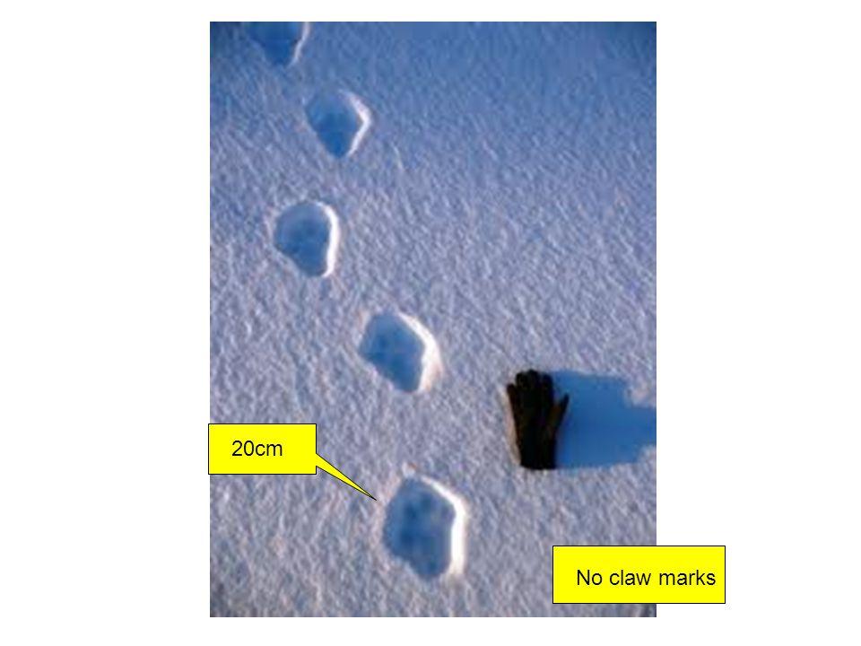 20cm No claw marks