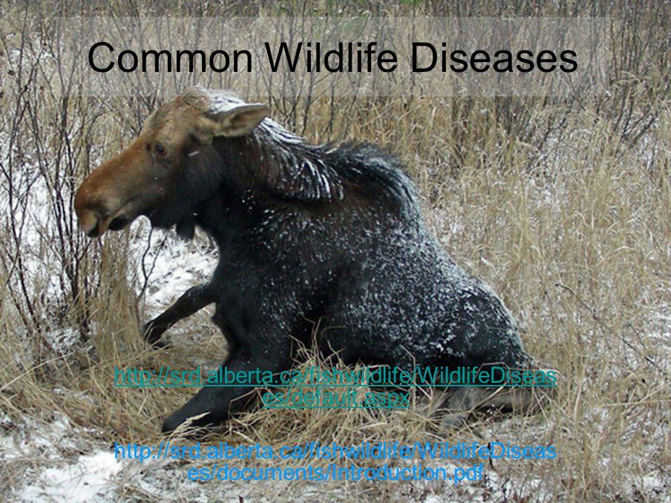Common Wildlife Diseases http://srd.alberta.ca/fishwildlife/WildlifeDiseas es/default.aspx http://srd.alberta.ca/fishwildlife/WildlifeDiseas es/docume