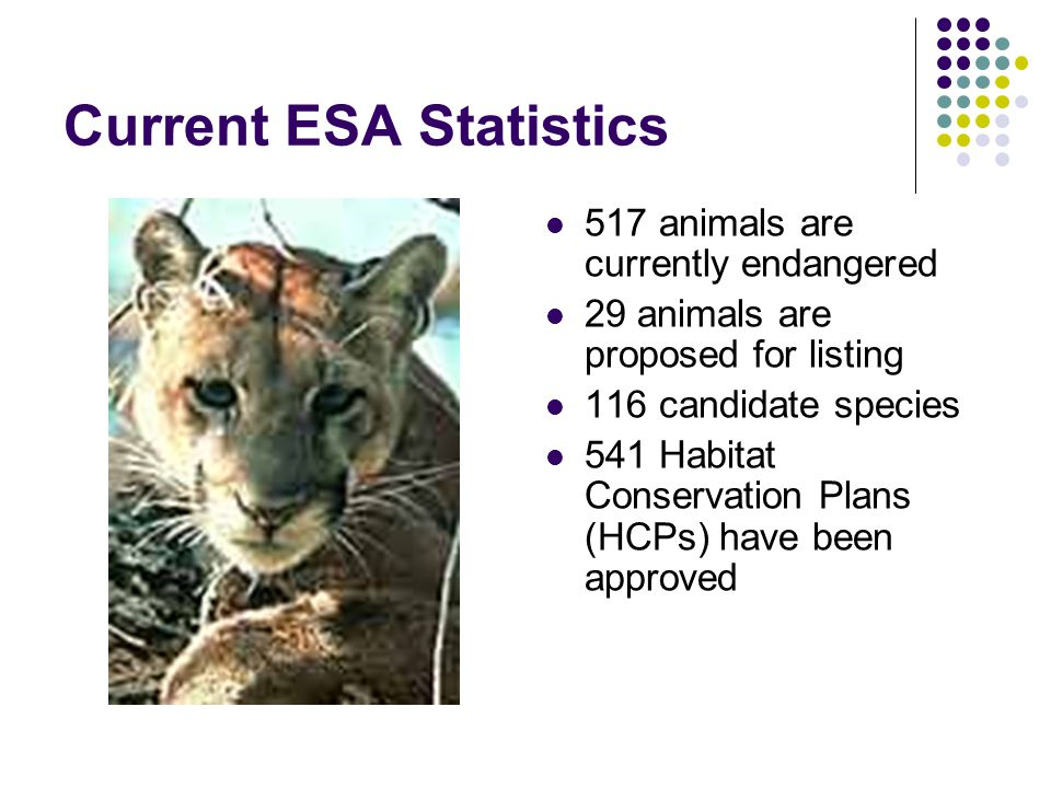 Current ESA Statistics 517 animals are currently endangered 29 animals are proposed for listing 116 candidate species 541 Habitat Conservation Plans (