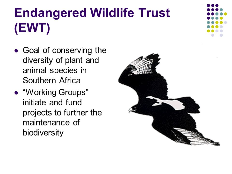 "Endangered Wildlife Trust (EWT) Goal of conserving the diversity of plant and animal species in Southern Africa ""Working Groups"" initiate and fund pro"