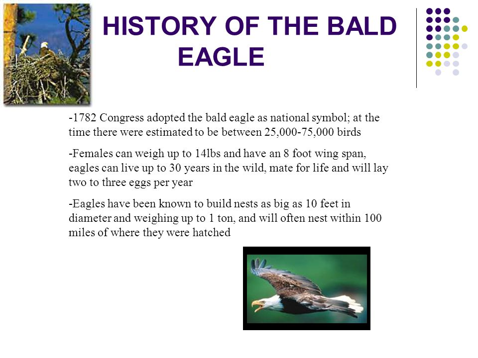 HISTORY OF THE BALD EAGLE -1782 Congress adopted the bald eagle as national symbol; at the time there were estimated to be between 25,000-75,000 birds
