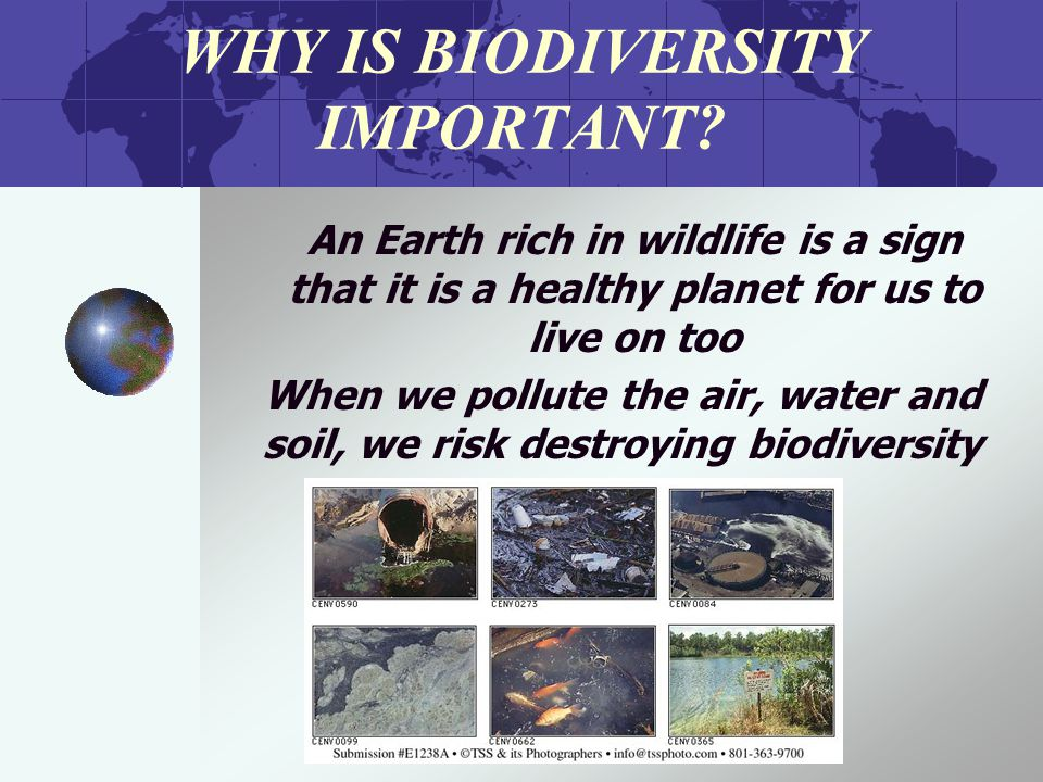 WHY IS BIODIVERSITY IMPORTANT.
