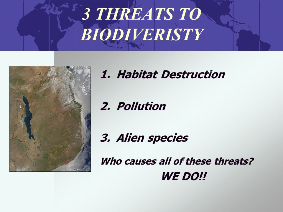 3 THREATS TO BIODIVERISTY 1.Habitat Destruction 2.Pollution 3.Alien species Who causes all of these threats.
