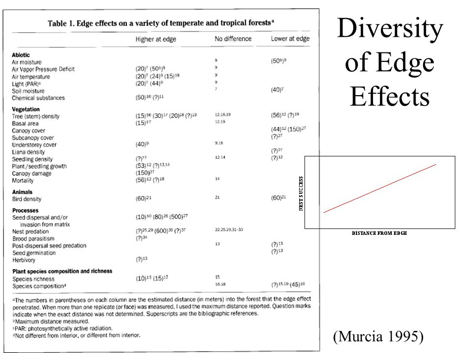 Diversity of Edge Effects (Murcia 1995)