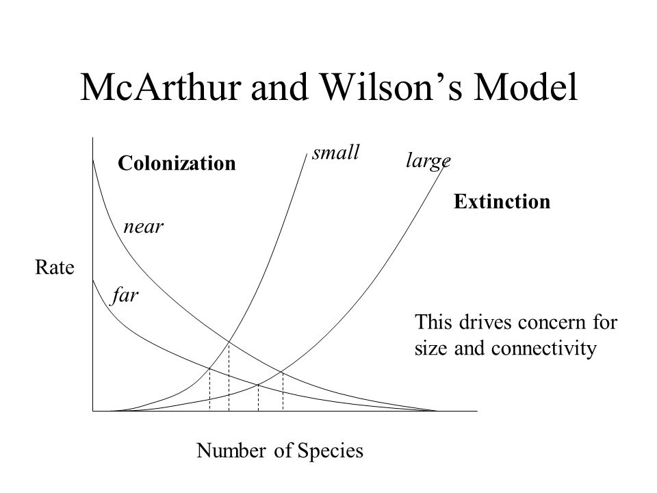 McArthur and Wilson's Model Number of Species Rate Extinction Colonization small large near far This drives concern for size and connectivity