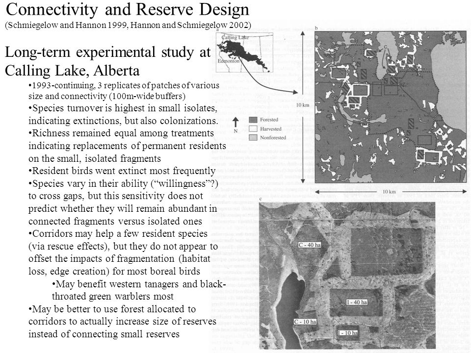 Connectivity and Reserve Design (Schmiegelow and Hannon 1999, Hannon and Schmiegelow 2002) Long-term experimental study at Calling Lake, Alberta 1993-continuing, 3 replicates of patches of various size and connectivity (100m-wide buffers) Species turnover is highest in small isolates, indicating extinctions, but also colonizations.