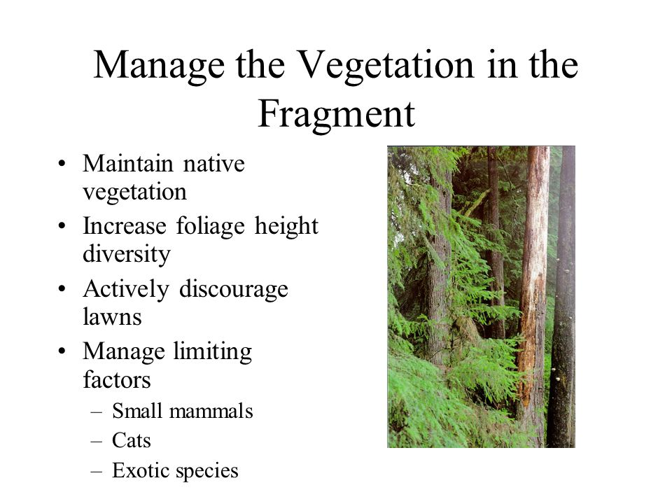 Manage the Vegetation in the Fragment Maintain native vegetation Increase foliage height diversity Actively discourage lawns Manage limiting factors –Small mammals –Cats –Exotic species