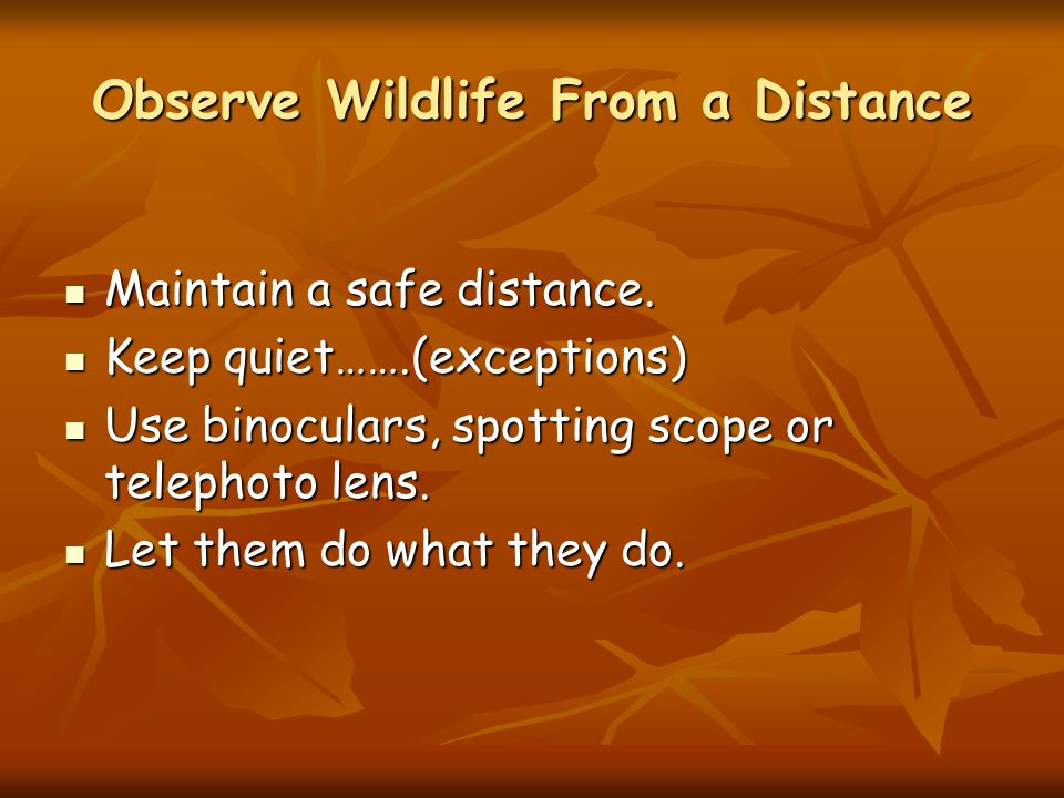 Observe Wildlife From a Distance Maintain a safe distance.