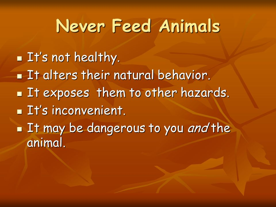 Never Feed Animals It's not healthy. It's not healthy.