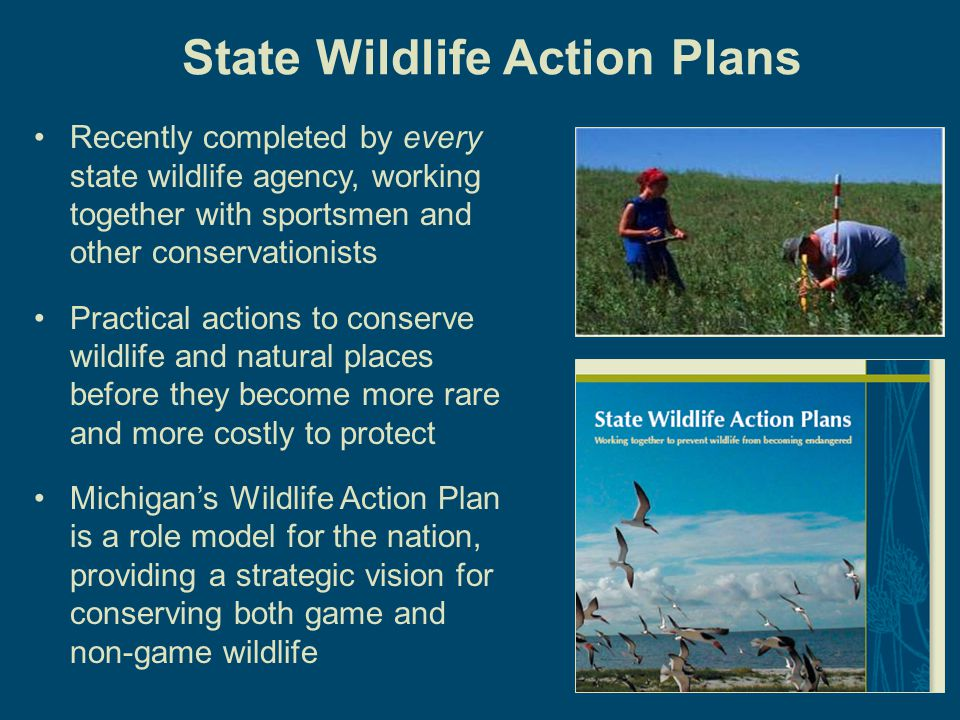 9 The Michigan Wildlife Action Plan A Platform For Increased DNR Funding The Michigan Wildlife Action Plan is a major step in the journey to preserve our outdoor heritage.