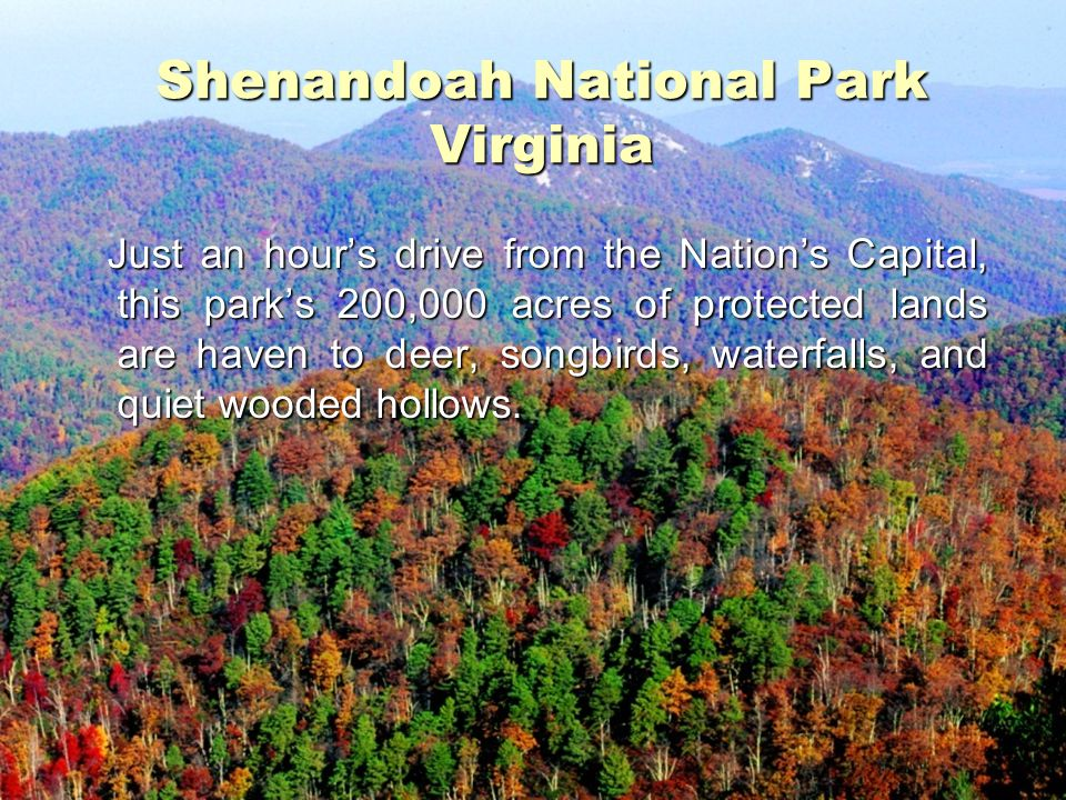 Shenandoah National Park Virginia Just an hour's drive from the Nation's Capital, this park's 200,000 acres of protected lands are haven to deer, song