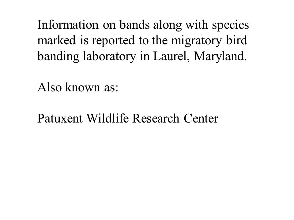 Information on bands along with species marked is reported to the migratory bird banding laboratory in Laurel, Maryland.