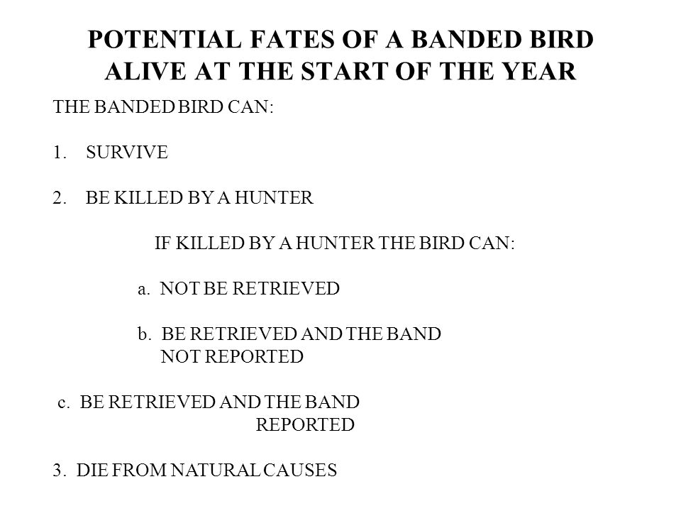 THE BANDED BIRD CAN: 1. SURVIVE 2. BE KILLED BY A HUNTER IF KILLED BY A HUNTER THE BIRD CAN: a.