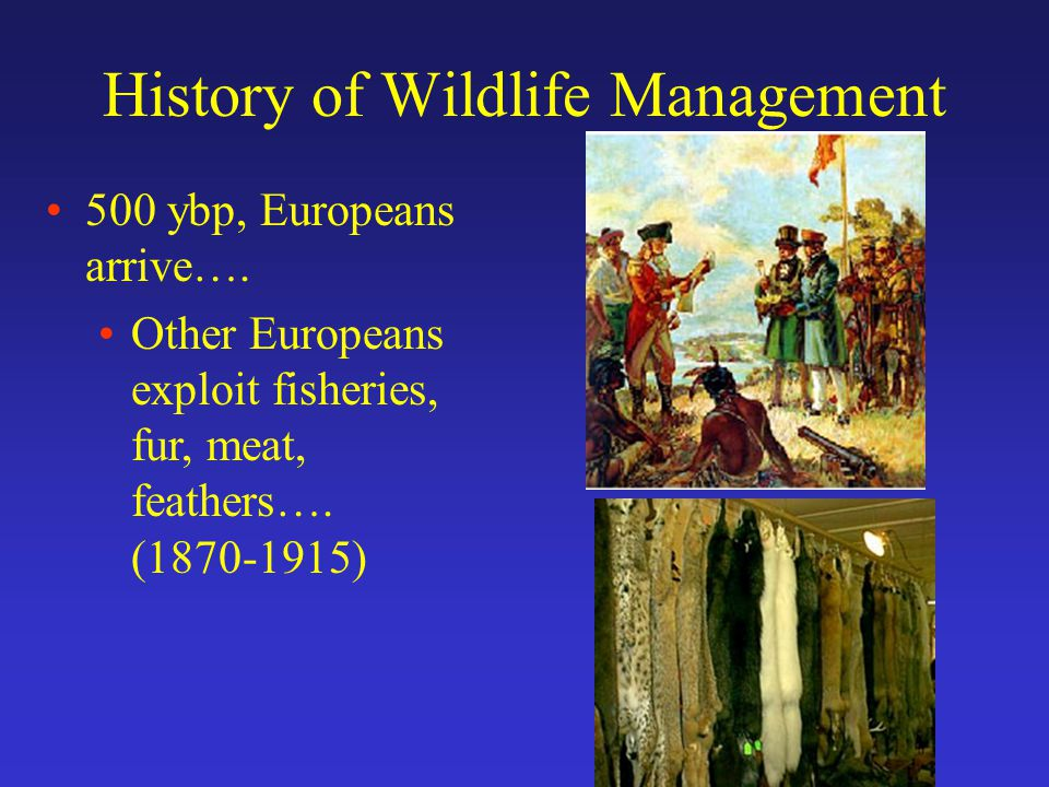 History of Wildlife Management 500 ybp, Europeans arrive….
