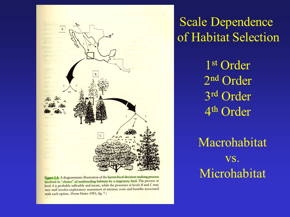 Scale Dependence of Habitat Selection 1 st Order 2 nd Order 3 rd Order 4 th Order Macrohabitat vs.